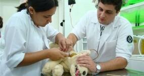 42_saude-animal-auxiliar-de-veterinaria-e-pet-shop