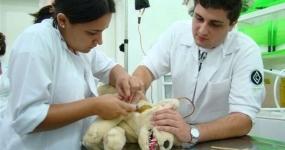42_saude-animal-auxiliar-de-veterinaria-e-pet-shop