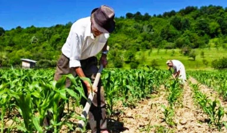 agricultura-familiar-e-sustentabilidade