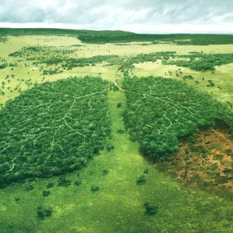 avaliacao-de-impacto-ambiental