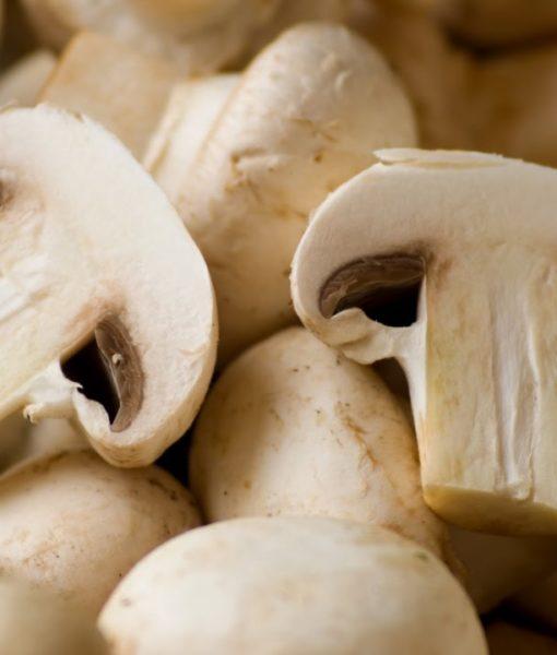 cultivo-de-cogumelo-e-champignon