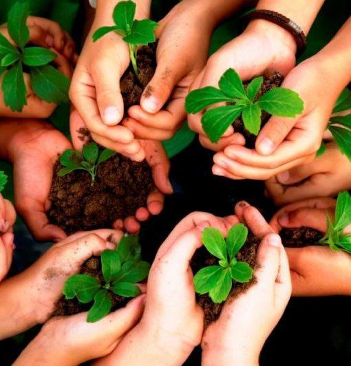educacao-ambiental-e-sustentabilidade