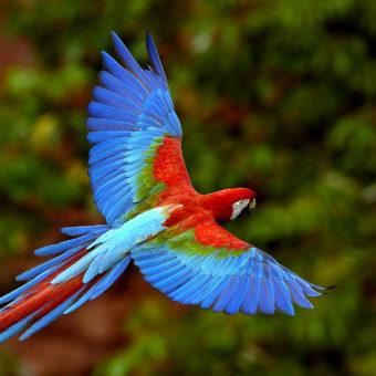 fauna-e-flora-amazonica