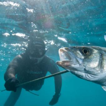 pesca-submarina
