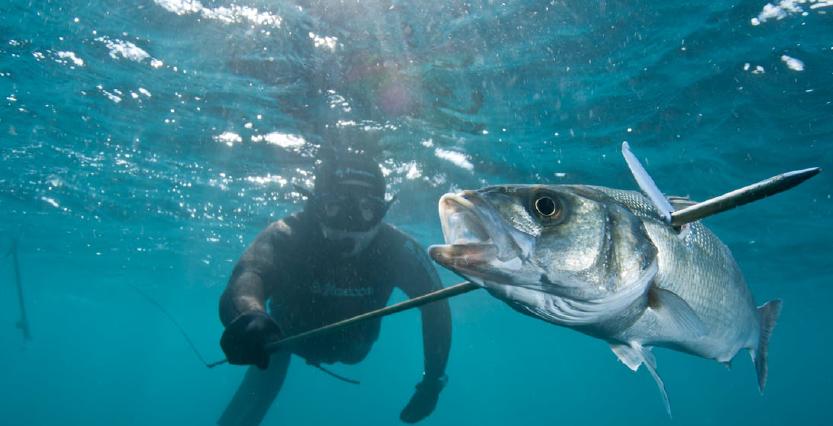 Curso De Pesca Submarina Curso Online Com Certificado Gratuito